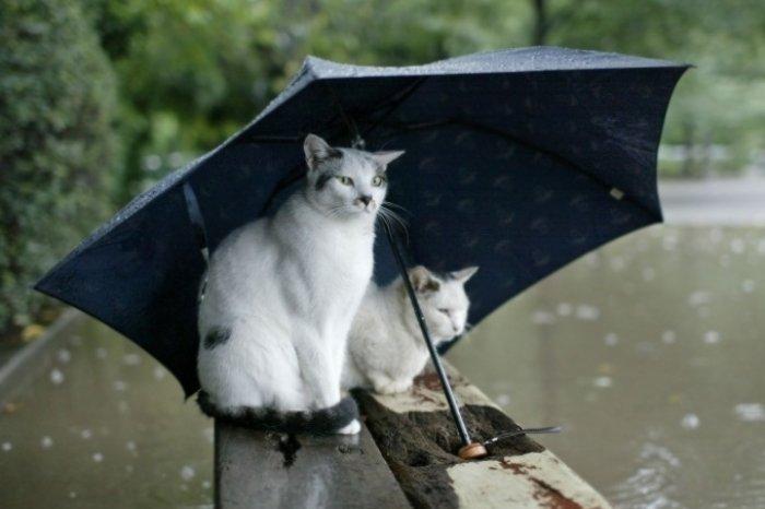 Фото новости - Субботняя погода не радует