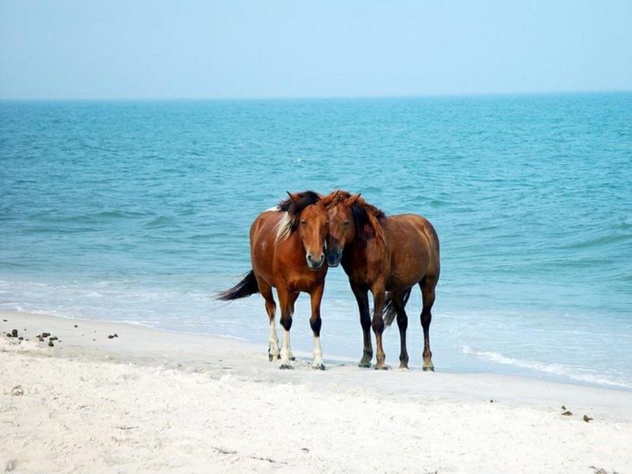 Фото новости - Смешались в кучу кони, люди: под Феодосией отдыхающие делили пляж с табунами лошадей