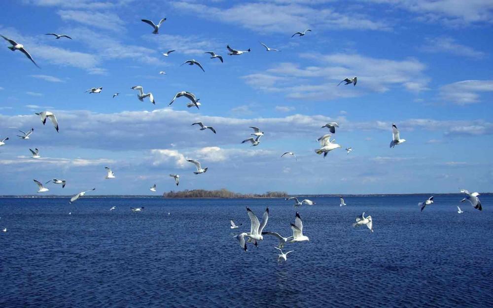 Фото новости - Погода в Феодосии
