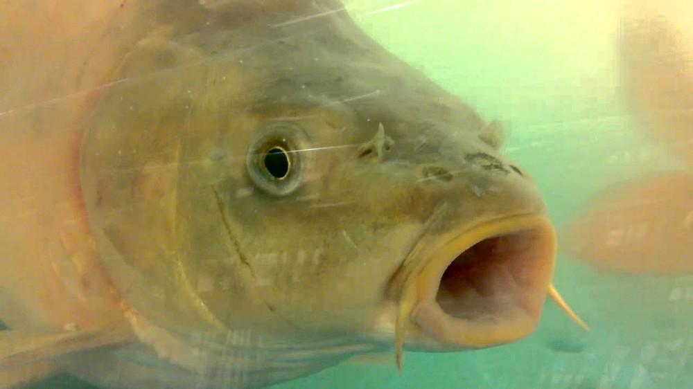Фото новости - Рыба предсказала бы грозу в Феодосии