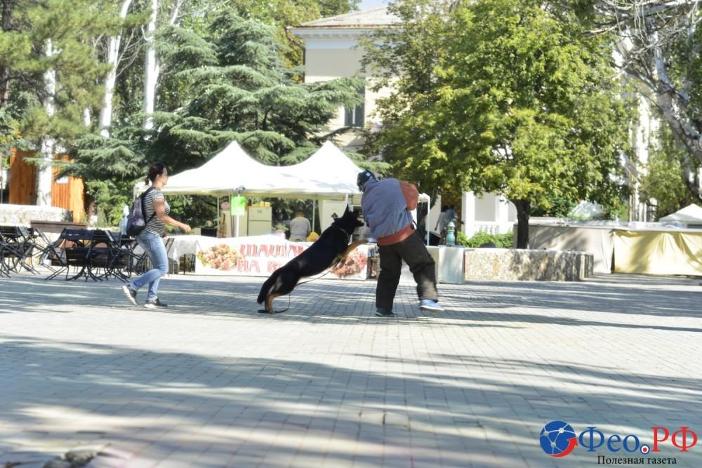 Фото новости - Показательные выступления служебных собак в День города Феодосии