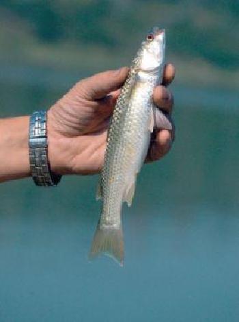 керченский пролив рыбалка