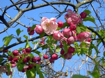 Увеличить - Когда весна придёт?