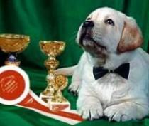 В Феодосии пройдет выставка собак