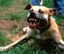 Крымчанин пойдет под суд за попытку натравить собаку на полицейского