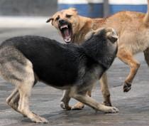 Новости Феодосии: Власти Керчи ещё не определились со способом сокращения числа бродячих собак