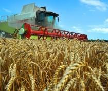 Крым получил 2,8 млрд руб объединенной субсидии на развитие сельского хозяйства