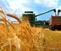 Минсельхоз России начнет с Крыма государственные закупочные интервенции зерна – в республике убрано 99,5% посевных площадей