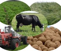 Крым и Севастополь создали Объединенную коллегию агропромышленного комплекса