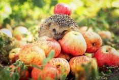 Феодосия. Новость - Масштабный праздник урожая состоится в Коктебеле в сентябре