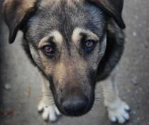 Джанкойская полиция возбудила дело против двух живодеров, пытавшихся убить и съесть собаку