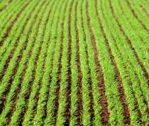 Крымские аграрии планируют на 30 тыс га увеличить площади озимых культур