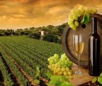 Винодельческая отрасль Крыма пополнила бюджет республики в этом году на 1,8 млрд рублей