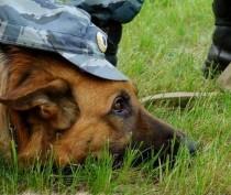 Новости Феодосии: Феодосийские власти предложили местной полиции помощь в развитии служебного собаководства