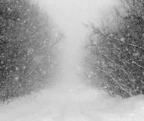 Потепление в Крыму начнется в пятницу – гидрометцентр