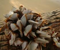 Ещё шесть новых морских участков для разведения рыбы и моллюсков сформированы у берегов Крыма