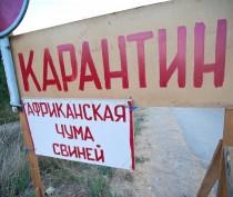 Трупы свиней обнаружены в зоне карантина по АЧС в Ленинском районе Крыма