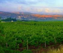 Крымские аграрии за год заложили более тысячи гектаров садов и виноградников