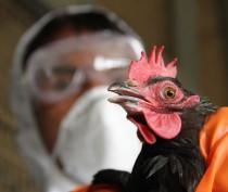 Россельхознадзор сообщил о высокой угрозе появления птичьего гриппа в Крыму