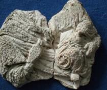 Фрагменты барельефа Богородицы с младенцем найдены в крепости Керчь