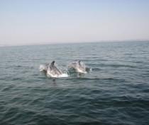 Росприроднадзор и биологи выясняют причину гибели нескольких дельфинов на керченском побережье