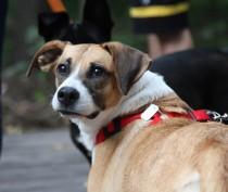 Совмин Крыма отказался запрещать собакам лаять по ночам