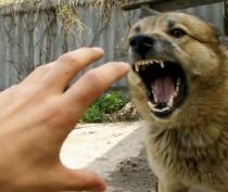 Количество укушенных животными крымчан за год возросло почти на 5%