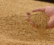Крымские аграрии собрали миллион тонн зерна