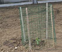 В Феодосии посадили тополь Победы – клон выжившего в Сталинградскую битву дерева