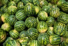 Феодосия. Новость - Ярмарка реализации сельскохозяйственной продукциив Феодосии