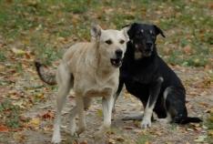 Феодосия. Новость - В Феодосии собирают подписи под коллективным обращением в защиту бездомных животных (+ опрос)