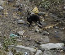 В Феодосии усилят патрулирование в районе генуэзского рва