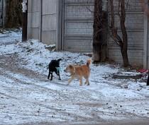 Новости Феодосии: Феодосия, чуть припорошенная снегом