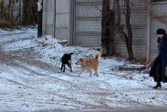 Феодосия. Новость - Феодосия, чуть припорошенная снегом