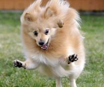 Новости Феодосии: Информация для феодосийцев, которые держат домашних животных