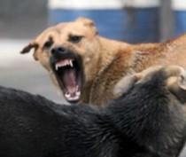 Новости Феодосии: В Феодосии планируют создать собачий питомник