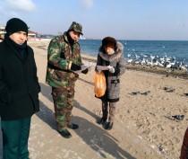 Новости Феодосии: Специалисты минприроды попросили феодосийцев не губить лебедей хлебом (ФОТО)