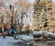 Новости Феодосии: Вдоль сквера Пушкина обрезают и пилят деревья