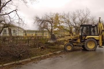 Фото новости - Феодосийские депутаты заинтересовались судьбой спиленных деревьев
