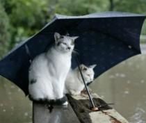 Новости Феодосии: Субботняя погода не радует