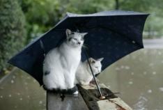 Феодосия. Новость - Субботняя погода не радует