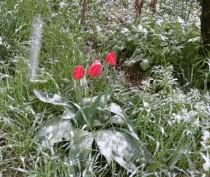 Новости Феодосии: «С первым снегом в 2017 году в Феодосии»!