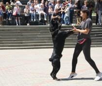 Новости Феодосии: Мир! Труд! Май! Собачки! Феодосия!