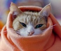 Новости Феодосии: В Феодосии прогнозируют сильные заморозки