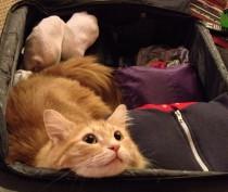 Новости Феодосии: Если котик хочет заграницу