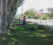 Новости Феодосии: В Феодосии начали косить траву (ФОТО)