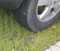 Упертый водитель схлопотал штраф за регулярную парковку на газоне в Коктебеле