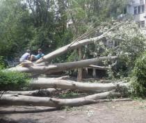 Новости Феодосии: В Феодосии валятся огромные старые деревья (ФОТО)