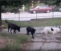 Новости Феодосии: В Феодосии собачья стая напугала и вынудила женщин с детьми уходить дворами (ВИДЕО)