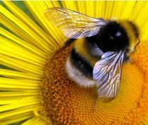 Новости Феодосии: Феодосийские пчелы заносят мед!